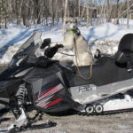 How to Snowmobile with a Dog