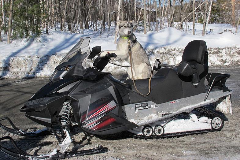 Dog on Snowmobile