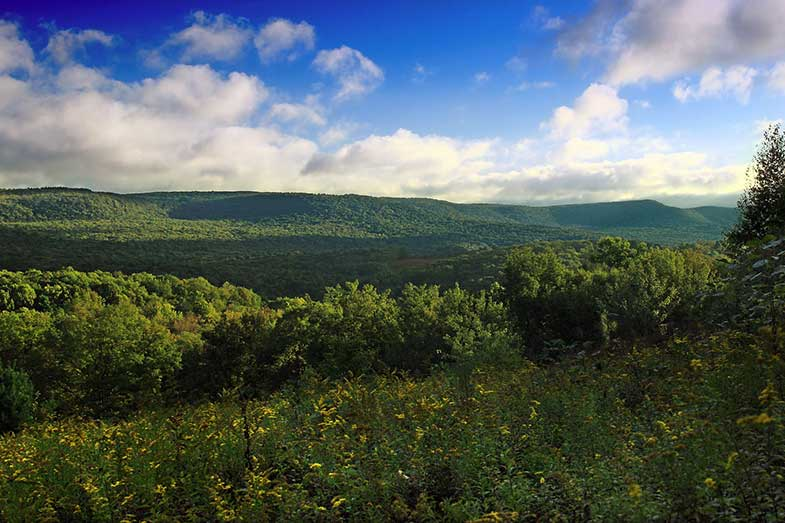 Lycoming County, Pennsylvania, Nature
