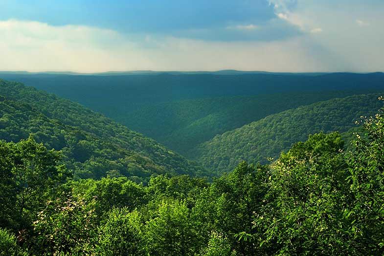 Beautiful Pennsylvania Forest