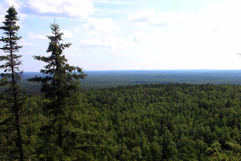 Minnesota Forest Mountain View