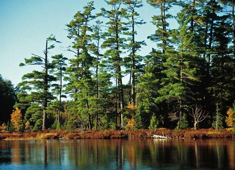 Ottawa National Forest Michigan
