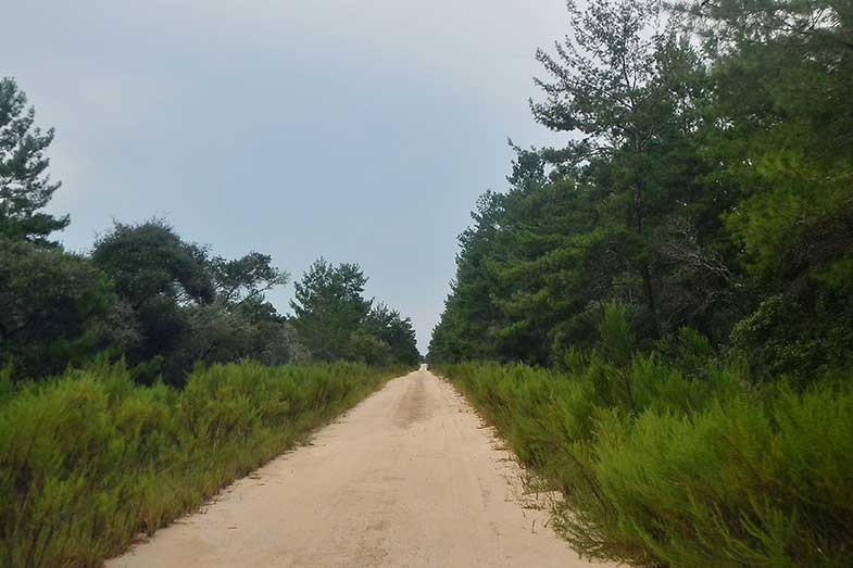 Ocala National Forest Trail