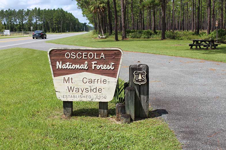 Osceola National Forest Mt. Carrie Wayside Sign