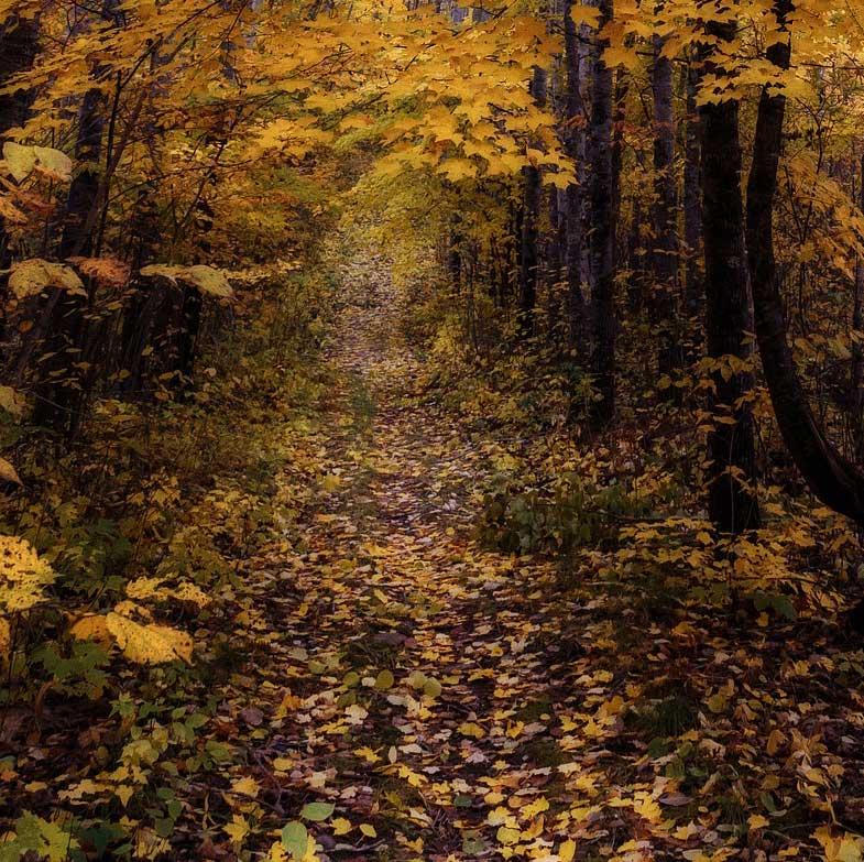 Minnesota USA Trail, Trees, Forest