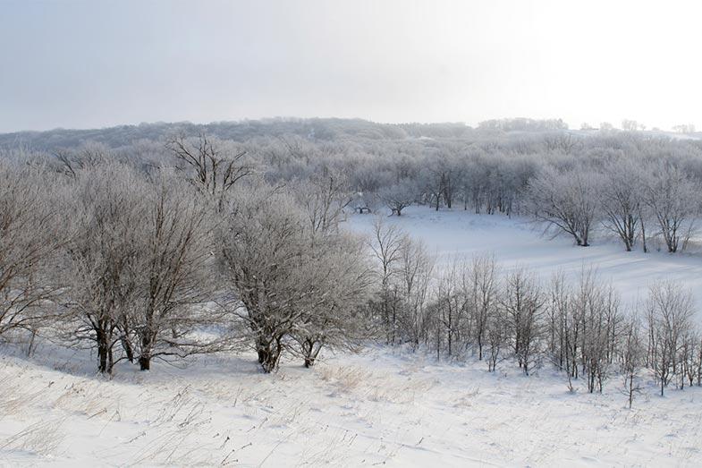 Icy Winter Landscape in Rural Iowa