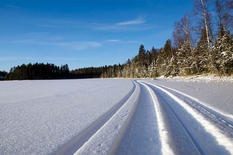 Snowmobile Trail Tracks Near Forest